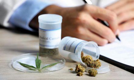 Cannabis médical: le revenu net annuel pourrait atteindre les 110.000 DH/Ha