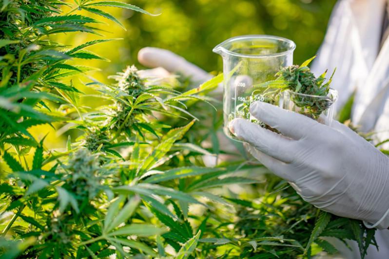 Tanger : Le 1er Congrès Marocain sur l'utilisation des dérivés du Cannabis