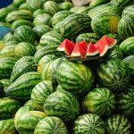L'ONSSA rassure sur l'absence de contaminants dans les pastèques marocaines