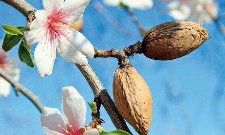 Le Maroc a augmenté de 148% ses importations d'amandes de Californie en 2021