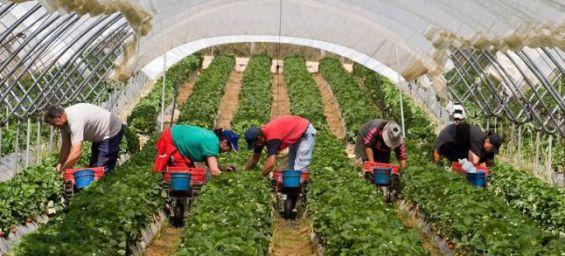 Tanger Med: Arrivée de 523 travailleuses saisonnières marocaines d'Espagne