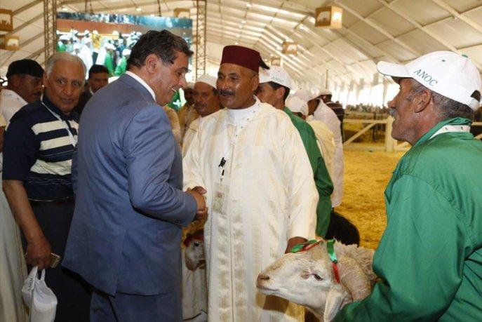 Aïd Al Adha: les transactions commerciales rapporterONT 12 MMDH, SELON Akhannouch