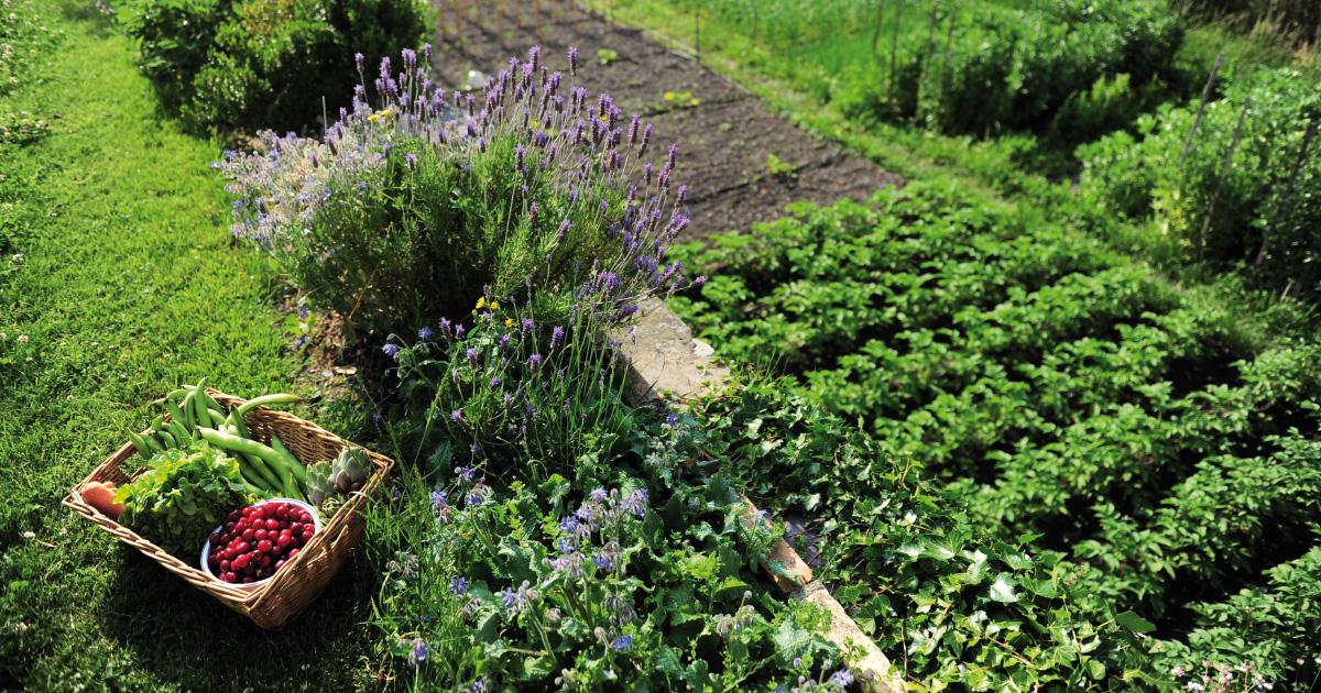 De belles perspectives pour l'agriculture bio à Sefrou