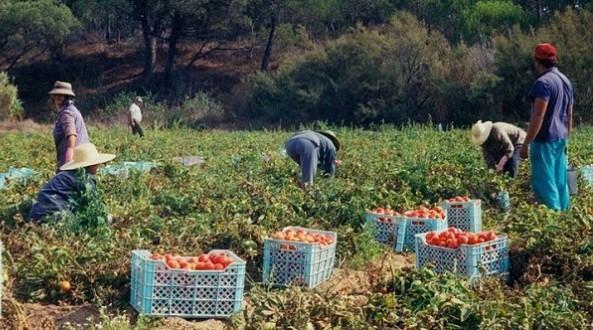 318.000 postes créés depuis juin 2020 DANS LE SECTEUR AGRICULTURE, FORÊT ET PÊCHE