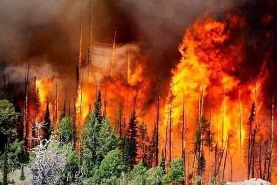 42 victimes dans les incendies qui ravagent le nord de l'Algérie