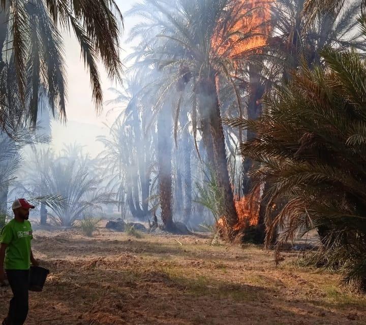 Zagora : 2.500 palmiers ravagés par les flammes