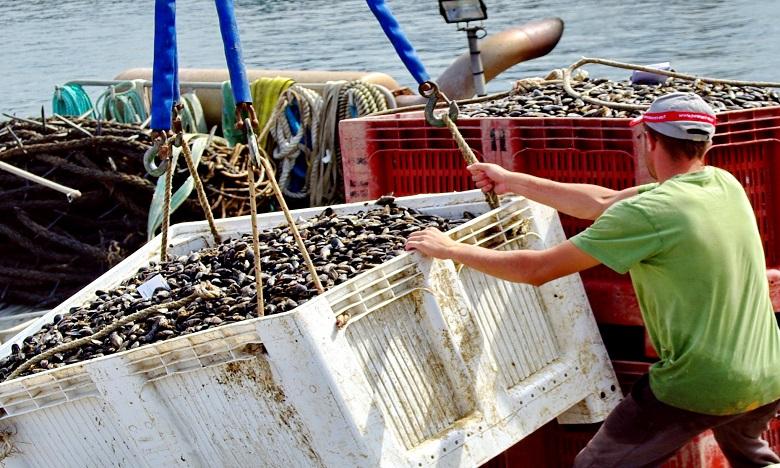 Cabo Negro-Martil : Interdiction de la récolte et commercialisation des coquillages