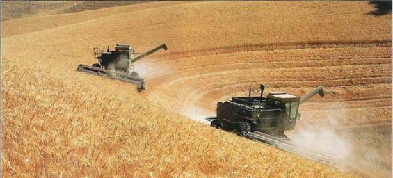 les importations de blé seront à la baisse en 2021/2022 1