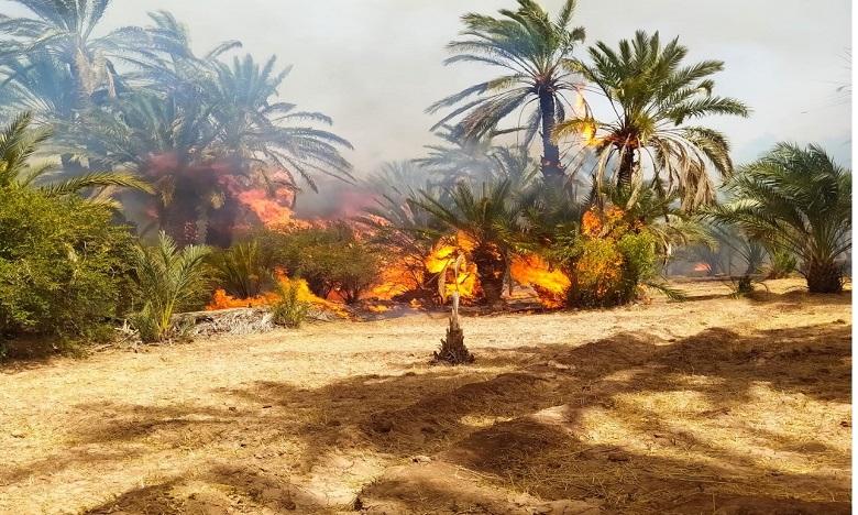 l'incendie de « l'oasis de Targa » totalement maîtrisé