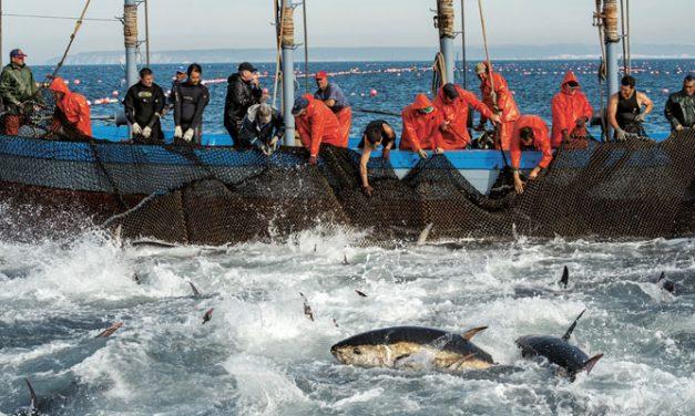 """maroc-ue: Pour l'Espagne, défendre l'accord de pêche est """"une priorité"""""""